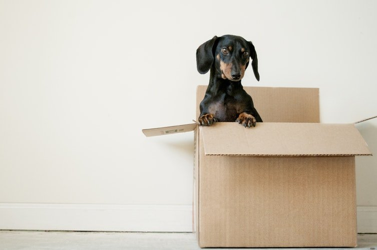 Make inside cardboard house for your pet from leftover boxes
