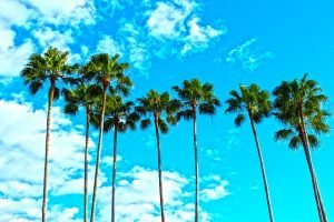 Enjoy the palm trees and the sky with long distance movers Florida.