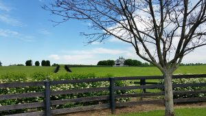 Fence of the farm with green grass and tree.