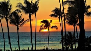 long distance moving companies Hawaii bring you to the beach with palm trees and sunset