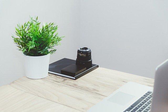 a desk plant