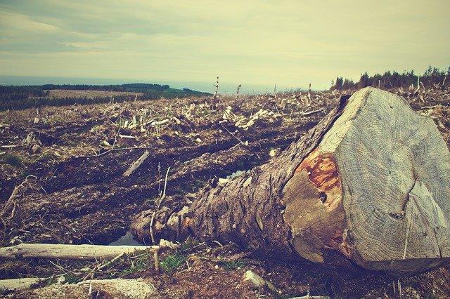 tree trunk cut down