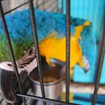 Parrot in a cage. Here are tips for moving with birds.