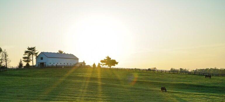 A farm in Kentucky at dawn.