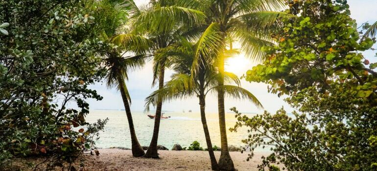 A beach seen through palms in Florida.