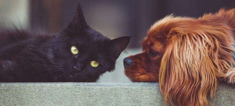 A black cat laying on the ground next to a brown dog.