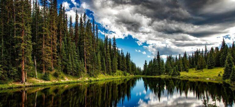 wood by a lake
