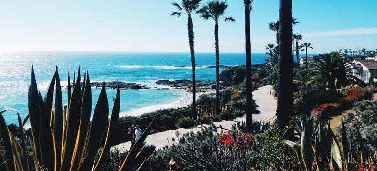 palms and a beach